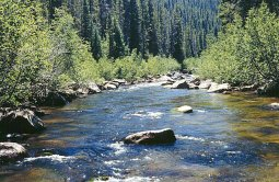 Fly fishing in Wyoming's Encampment River with Stream Side Adventures